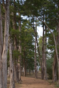 Up the cedar lined drive...